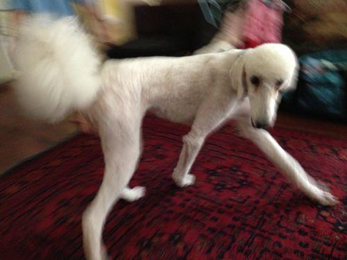 Skinny puppy 1
