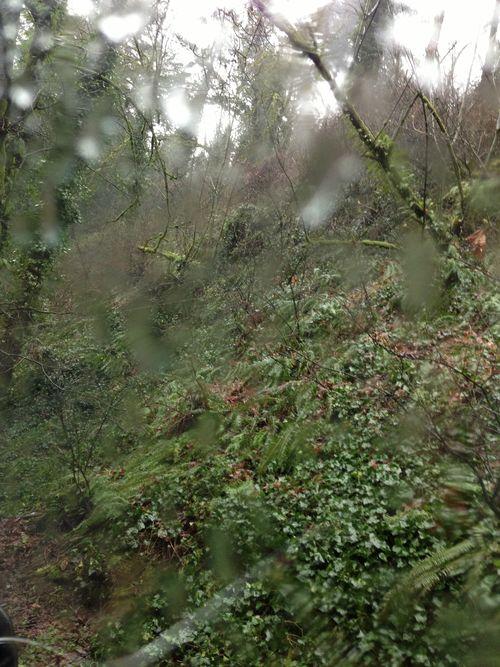Nice woods w raindrops