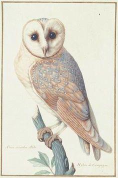 Owl 1 PD