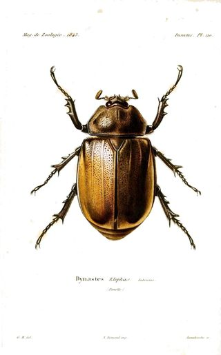 PD - Beetle type bug 2, French 19th C mod