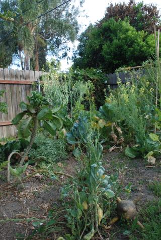 Dinosaur garden 1