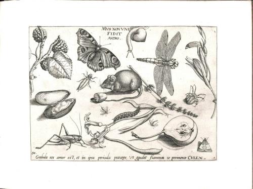 Botanical-Black-and-white-Decorative-Panel-4
