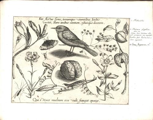 Botanical-Black-and-white-Decorative-Panel-3