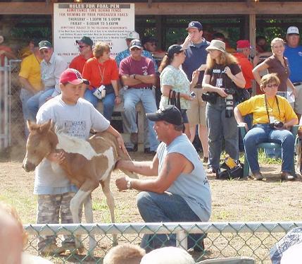 Pony_auction_2small