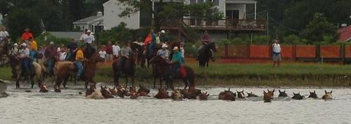 Pony_swim_2small
