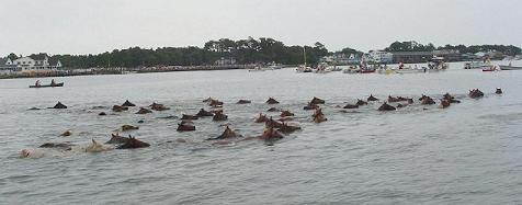 Pony_swim_3small