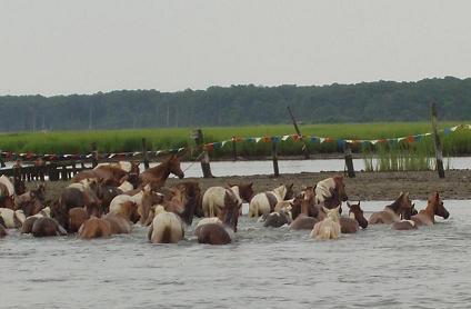 Pony_swim_4small